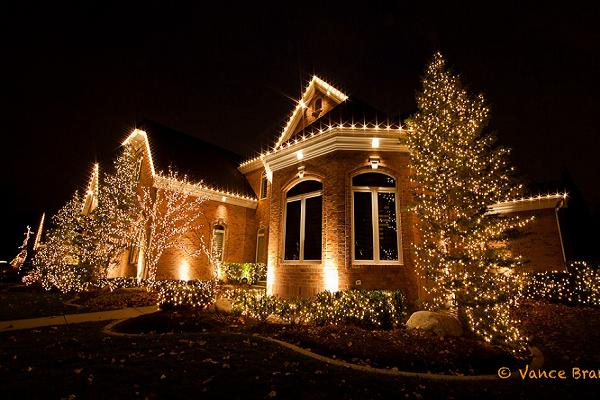 christmas-lights-bushes-house